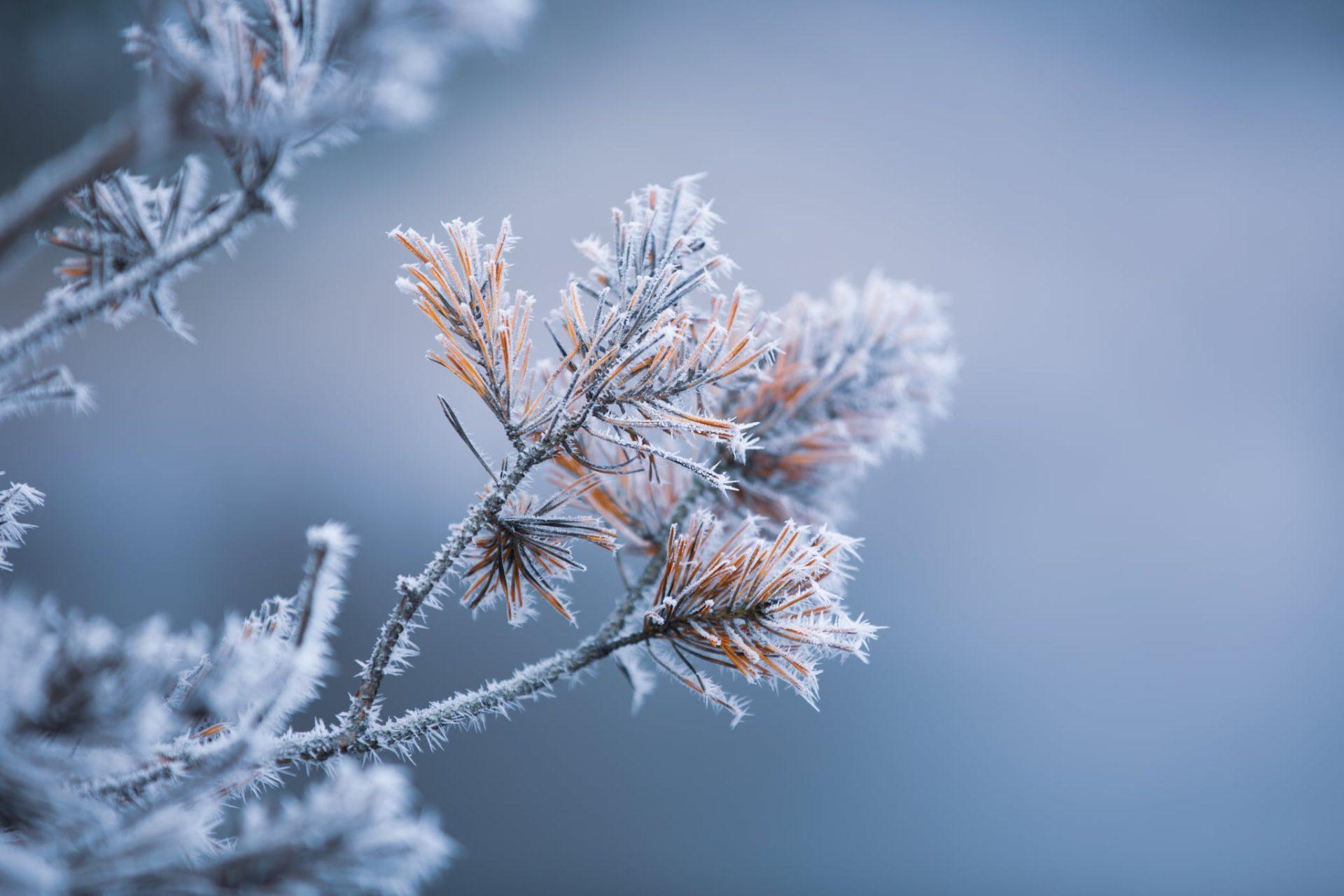 Best Winter Photos